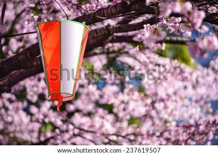 Tokyo, Japan cherry trees and lantern in Ueno Park. - stock photo