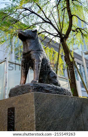 TOKYO, JAPAN - CIRCA MAY, 2014:  Hachiko statue of a famous royal dog of the same name. The statue is located in front of Shibuya station - stock photo