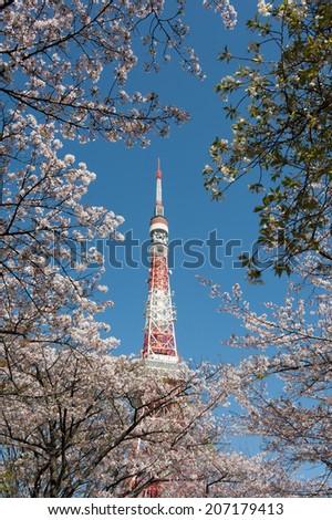 Tokyo Tower thru Cherry Trees - stock photo