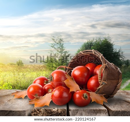 Tomatoes in a basket on the table and landscape - stock photo