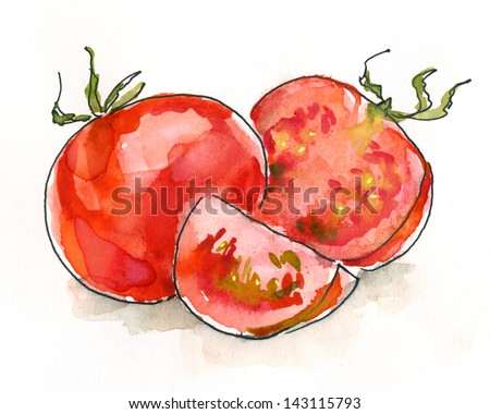 Tomatoes. Still life. Watercolor painting. Sketchy style.watercolor painting - stock photo