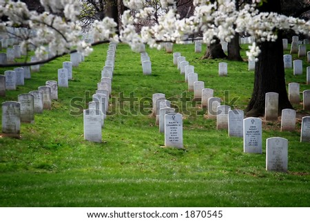 Tombstones at Arlington Cemetery with cherry branches in foreground. - stock photo