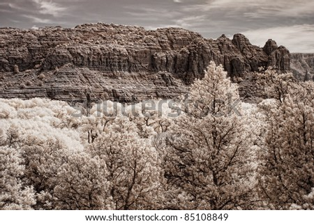 Toned image of fall near Sedona Arizona - stock photo