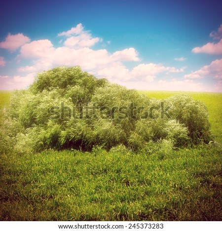 Toned Photo of Bush in the Summer Field - stock photo
