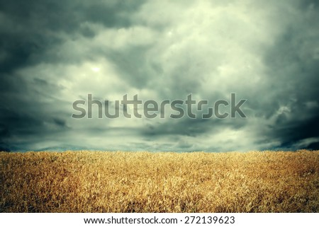 Toned Photo of the landscape with dramatic clouds in the wheat field - stock photo