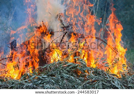Tongues of flame over burning wood - stock photo