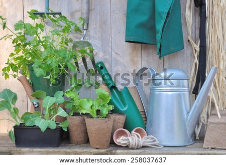tools and gardening accessories with seedlings on wooden background  - stock photo