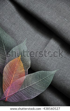 Top of colorful skeleton leaves in heart shape on gray background - stock photo