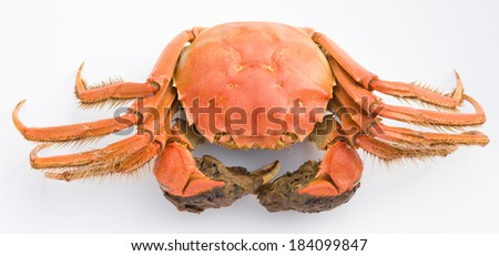 top view cooked crab with claws opened on a white background - stock photo