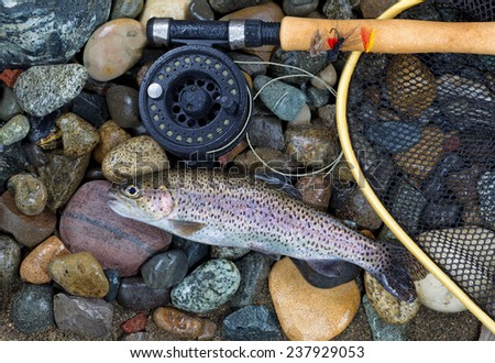 Top view of a single native wild trout next to fishing reel, landing net and pole on wet river bed stones - stock photo