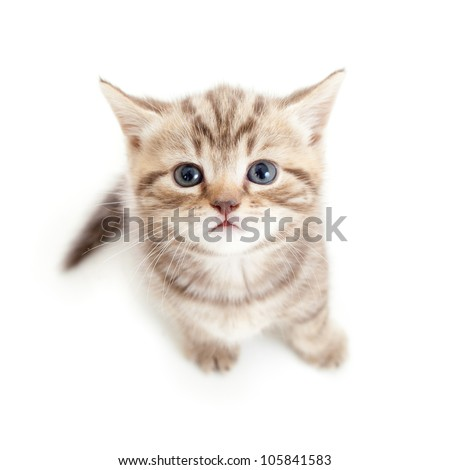 top view of baby cat kitten isolated on white background - stock photo