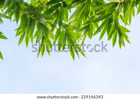 Top view of bamboo leaf with sky background - stock photo