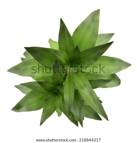 top view of bamboo plant in vase isolated on white background - stock photo