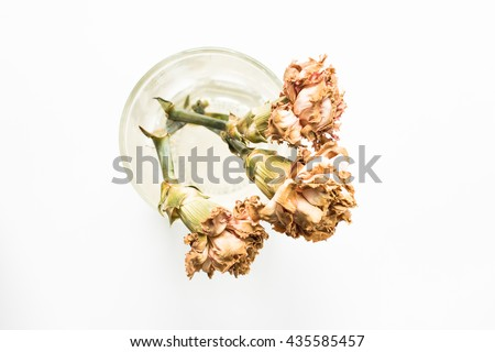 Top view of dried carnations flower on glass  isolated on white background. - stock photo