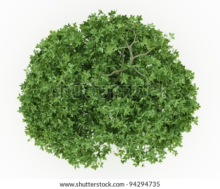 top view of erythrina trees collection isolated on white background - stock photo