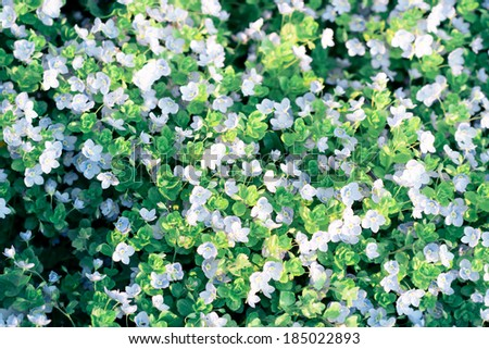Top view of field of small wild flowers - stock photo