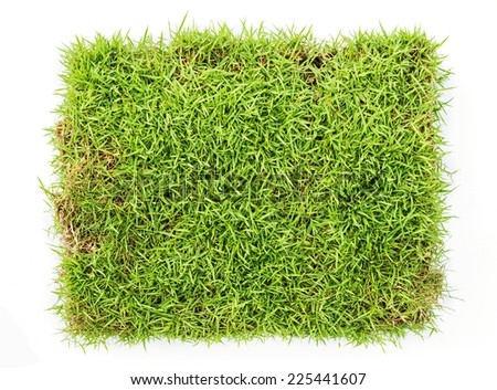 Top view of fresh green grass isolated on white background. - stock photo