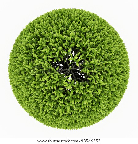 top view of  Green round tree isolated over white - stock photo