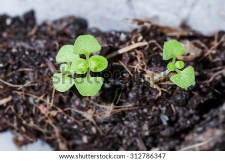 Top view of green sprout growing from ground - stock photo