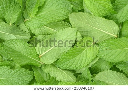 top view of mint leaves for background uses - stock photo