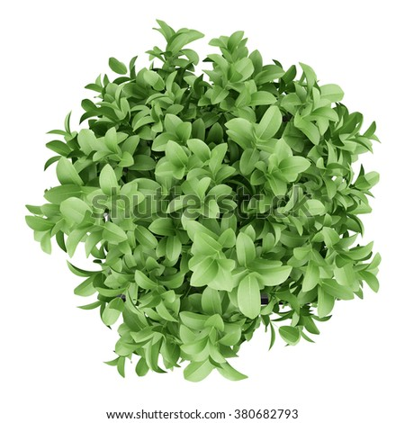 top view of plant in black pot isolated on white background - stock photo