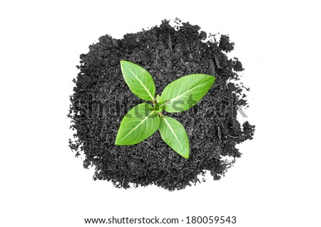 Top view of small green seedling growing out from heap of soil  - stock photo