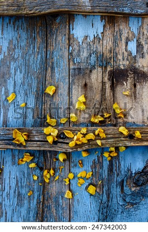 Top view of summer yellow flowers on vintage wooden texture. - stock photo