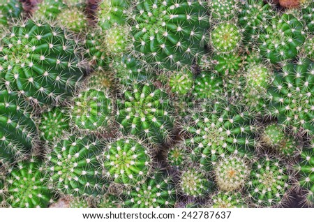 top view of the cactus group - stock photo