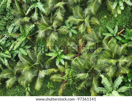 Top view of tropical forest. - stock photo