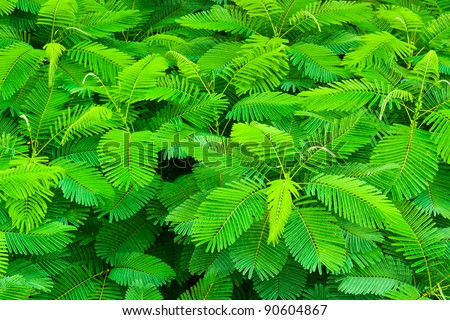 top view of tropical forest with young leaf - stock photo
