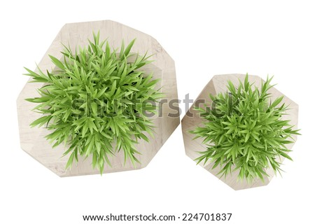 top view of two houseplants in wooden pots isolated on white background - stock photo