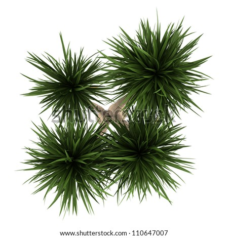 top view of yucca palm tree isolated on white background - stock photo