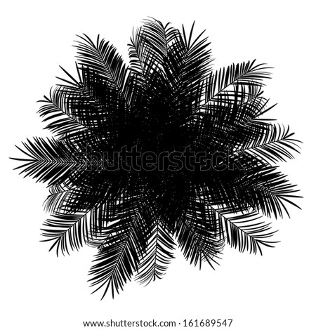 top view silhouette of date palm tree isolated on white background - stock photo