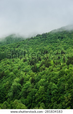 top view summer forest with sun light. - stock photo