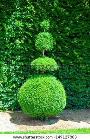 Topiary tree, formal garden, figure evergreen bush - stock photo