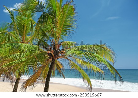 Tops of palm trees against the ocean on a sunny day - stock photo