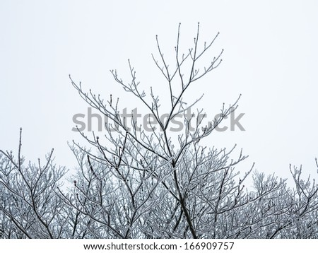 Tops of Trees Covered in Ice after Ice Storm - stock photo