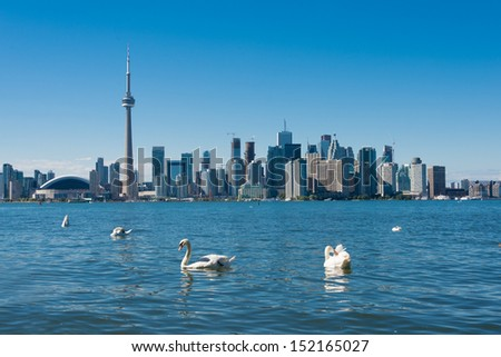 Toronto skyline with swans (Building signs are removed) - stock photo