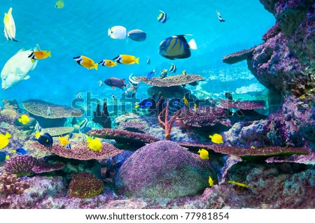 torpical fishes - stock photo