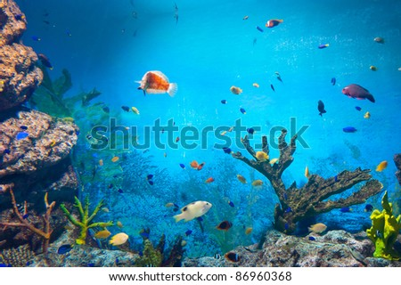 torpical fishes at Seoul Coex Oceanarium - stock photo