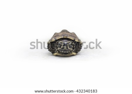 Tortoise shell contraction in the head on a white background / as shyness, fear. - stock photo