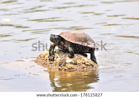 Tortoise sitting on rock in the sun - stock photo
