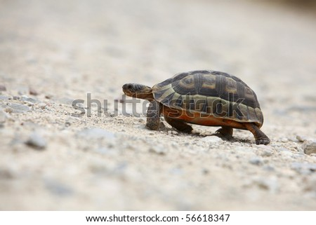 Tortoise walking on the sand - stock photo