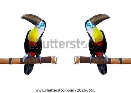 Toucan and exact copy isolated on white. To see similar images, please VISIT MY GALLERY. - stock photo