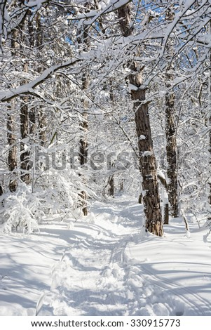 Tourist footpath in snowy winter landscape. Vertical composition. Sunny day. - stock photo