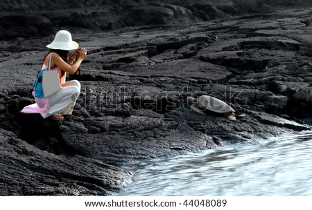 Tourist photographs sleeping sea turtle on Big Island, Hawaii, at Puuhonua o Honaunau National Historical Park.  Protected, sea turtles, by laws require space and no touching boundaries. - stock photo
