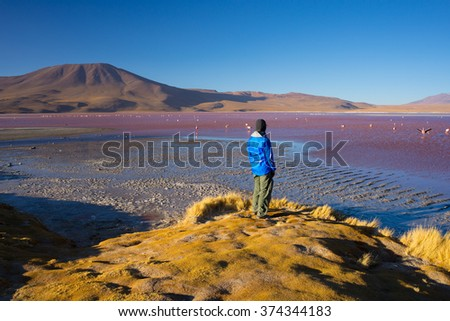 """Tourist watching the stunning view of """"Laguna Colorada"""" (Multicolored Salty Lake) with group of pink flamingos, among the most important travel destination in Bolivia. Rear view at sunset. - stock photo"""