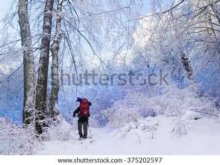 Tourist with a backpack in a blue snowy forest. Trees covered with snow. Winter walking tour in woodland. Ukraine. - stock photo