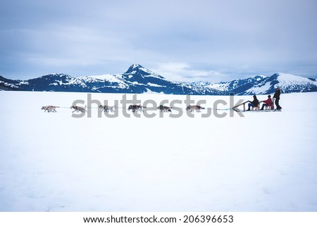 Tourists are pulled by a dog sled along the Mendenhall Glacier in Alaska just outside Juneau. - stock photo