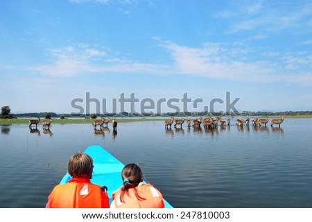 Tourists in a boat  look on the antelopes waterbuck. Safari, Naivasha Lake, Kenya  - stock photo